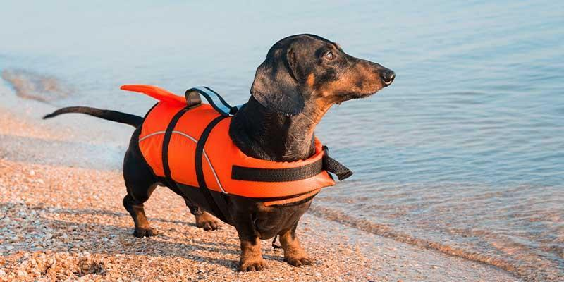 7 Summer Gift Ideas For Dachshund Lovers Alpha Paw