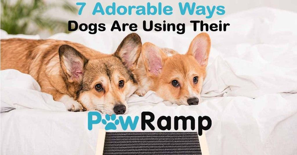 Dogs using their ramps