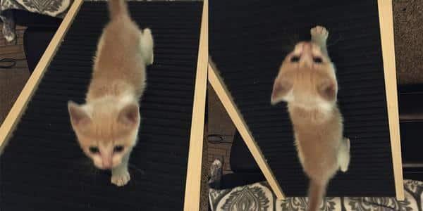 cat using ramp