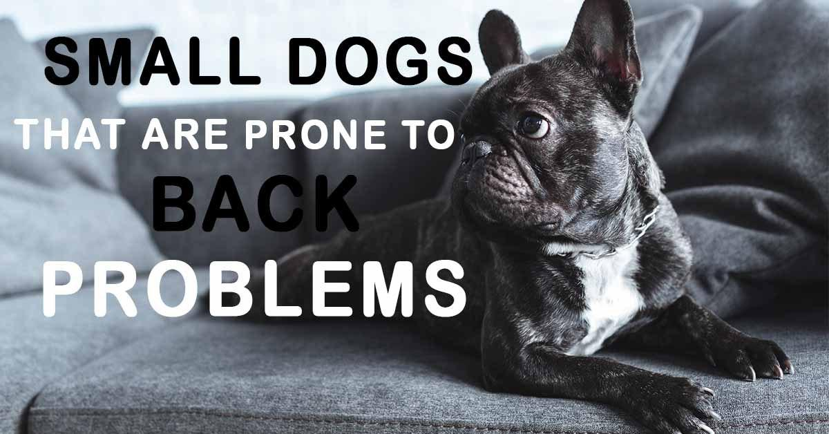 Dog breeds prone to back issues