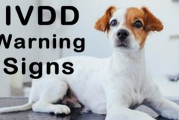 The Early Warning Signs of IVDD