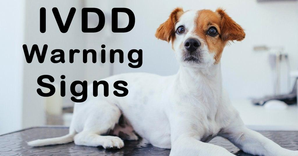 Early warning signs of IVDD