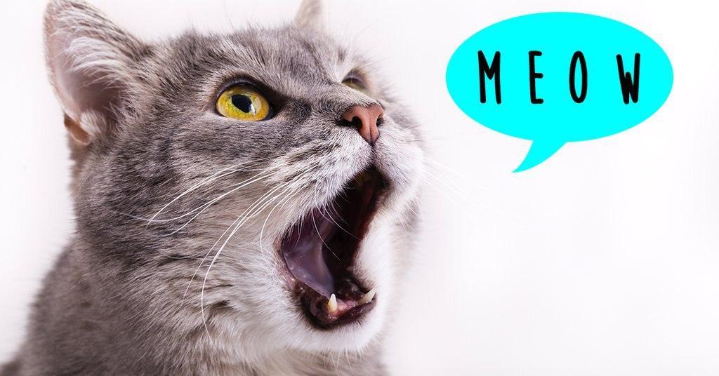 HOW TO SPEAK CAT 101