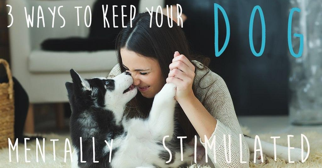 3 ways to keep your dog mentally stimulated