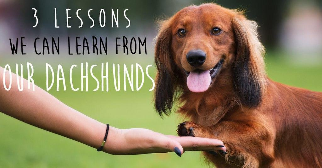 3 Lessons We Can Learn From Our Dachshunds