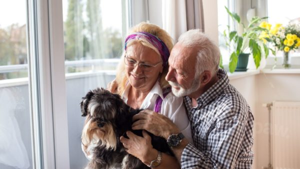 How to Determine Your Dog's Age in Dog Years