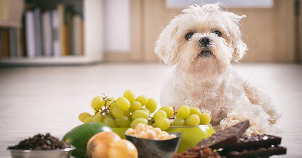 Common Household Foods that are Toxic for Dogs