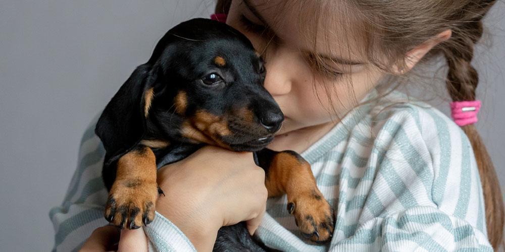 Do Dachshunds Make Good Apartment Dogs?