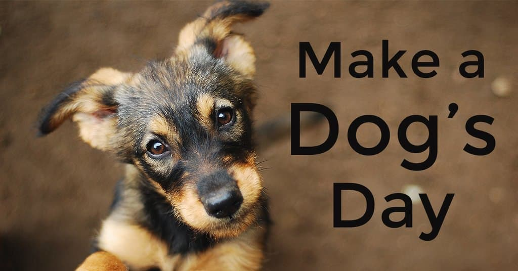 Make a Dog's Day Blog Cover