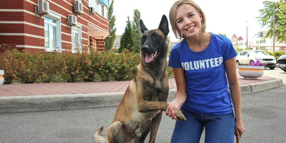 Volunteer at Dog Shelter
