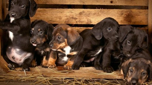 Top 5 Most Misunderstood Dog Breeds A Pet Parent Guide