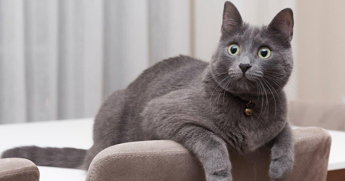 5 rare cat breeds