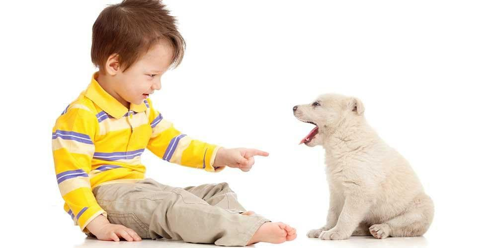 Dog Training 101: Sit, Down, and Stay!