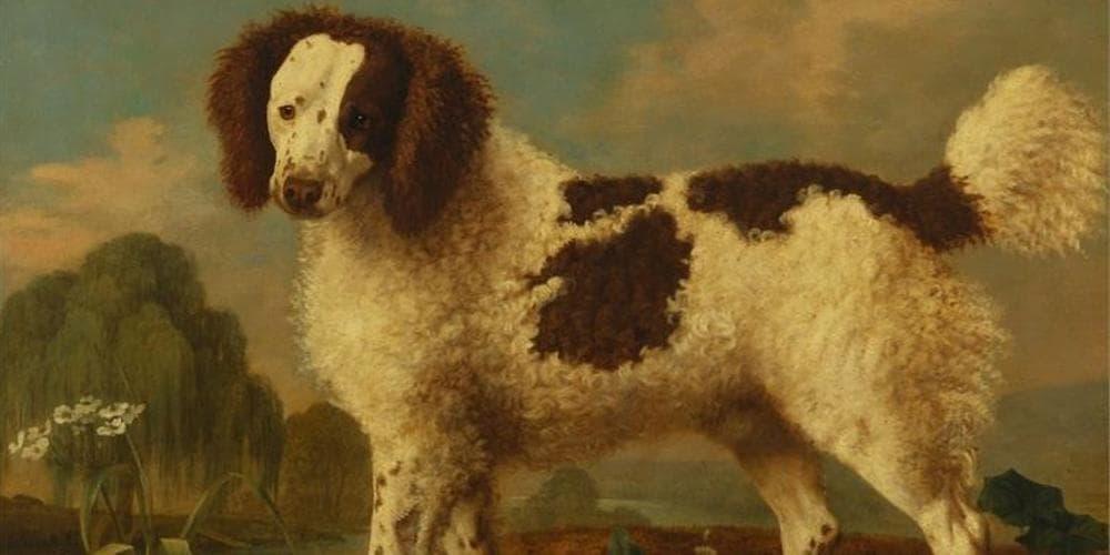 Salish Wool Dog