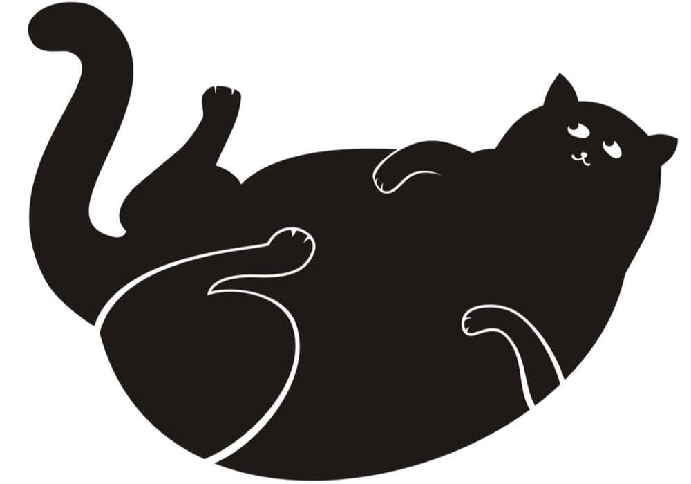 Cat Obesity is Deadly, But You Can Change That