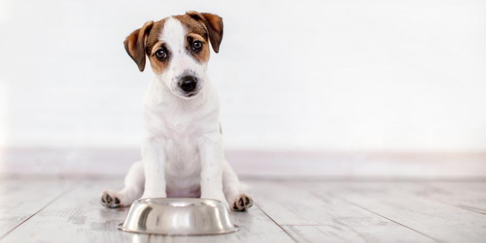 Should My Dog Become Vegan