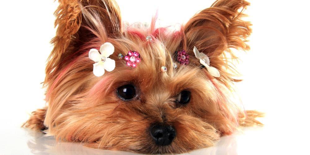 Hair Color and Nailpolish on My Dog: Yes or No?