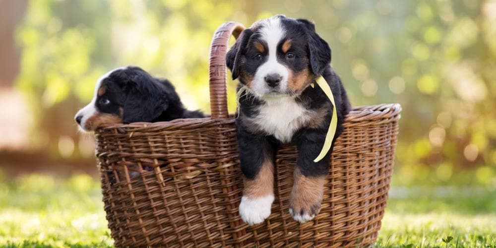 Tips for A Shinier and Healthier Fur that will Make Every other Dog go WOW!