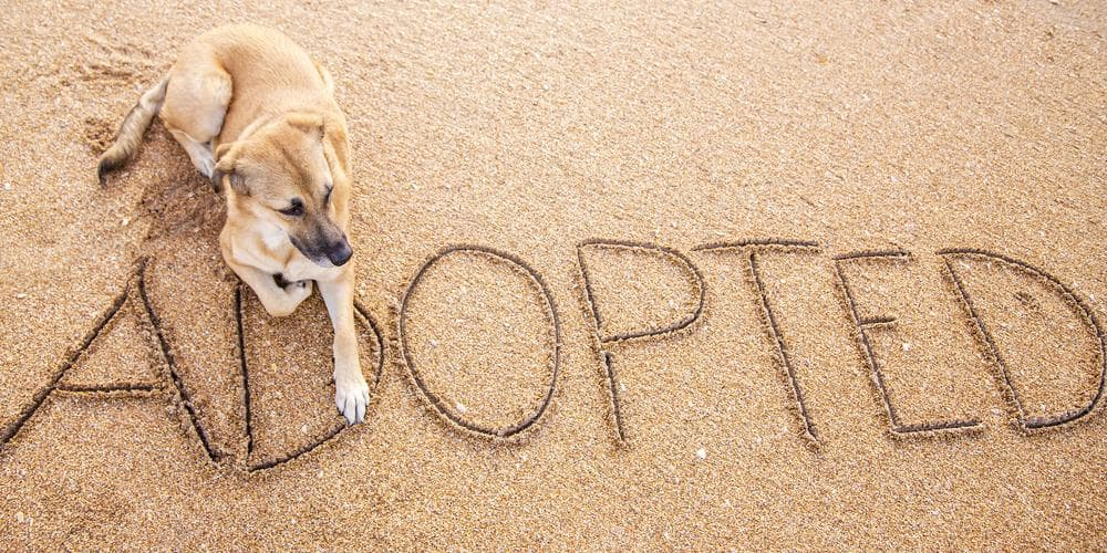 Adopt-Don't-Shop! But Why?