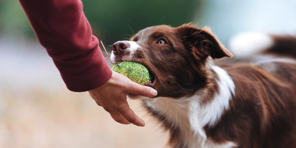 How To Safely Play With Your Dog