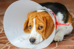What To Do When Your Dog Is Injured