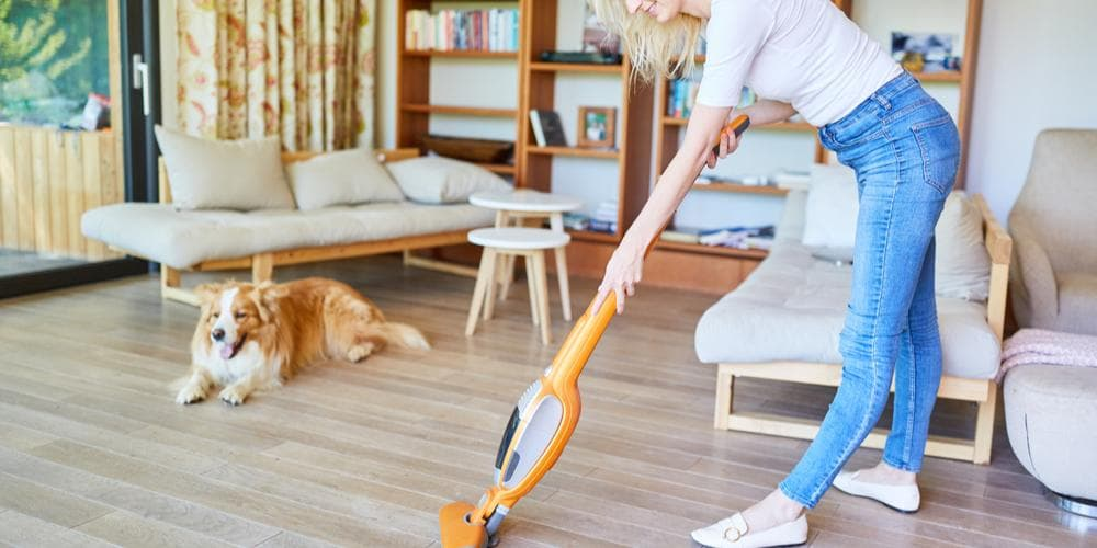 Does Dust Affect Your Pet Dog