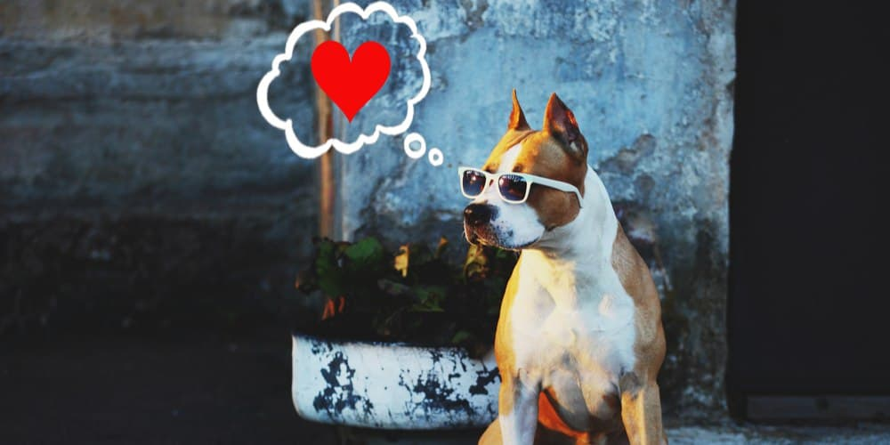 Is Your Dog In Love?
