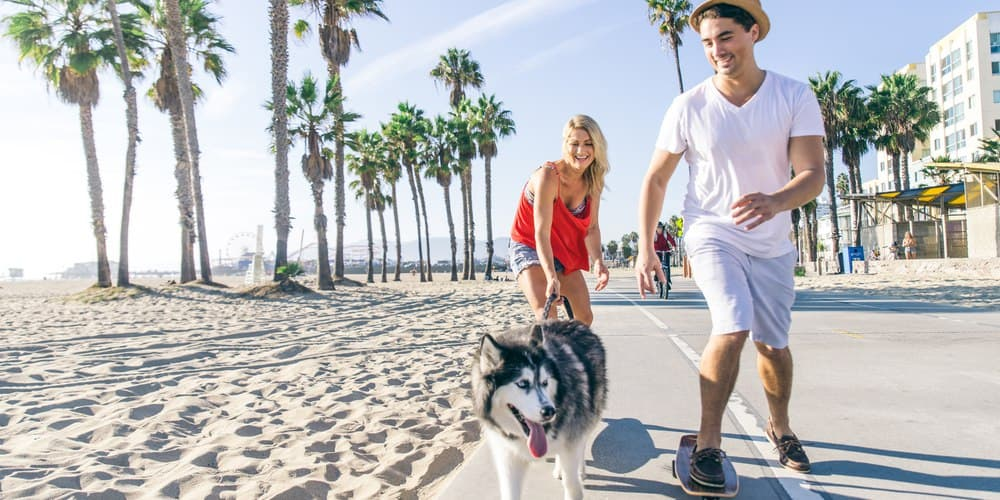 Warnings About Walking Your Dog On The Hot Pavement!