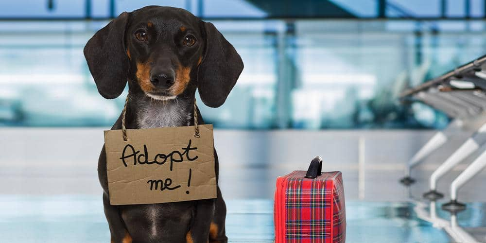 Dachshund Wants to be Adopted