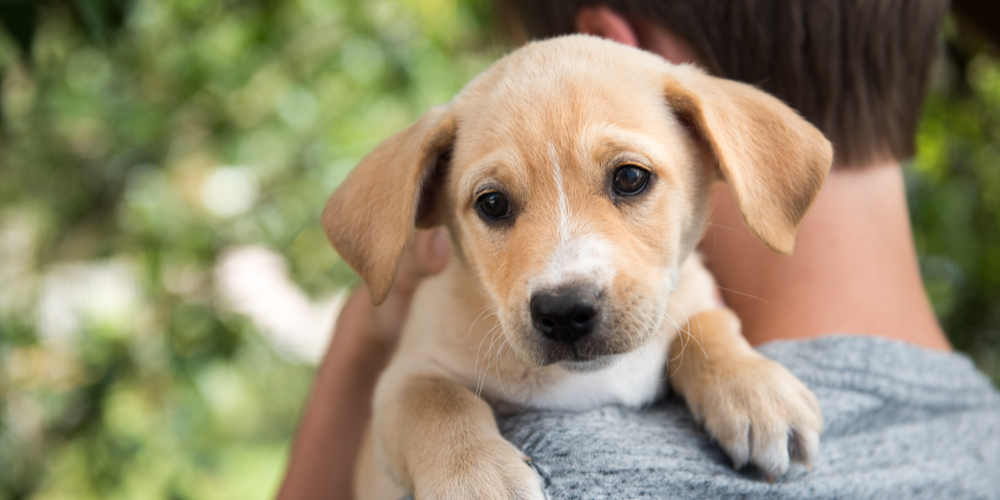 Thinking About Getting A Dog? Here Are A Few Reasons Why You Should Go For It!