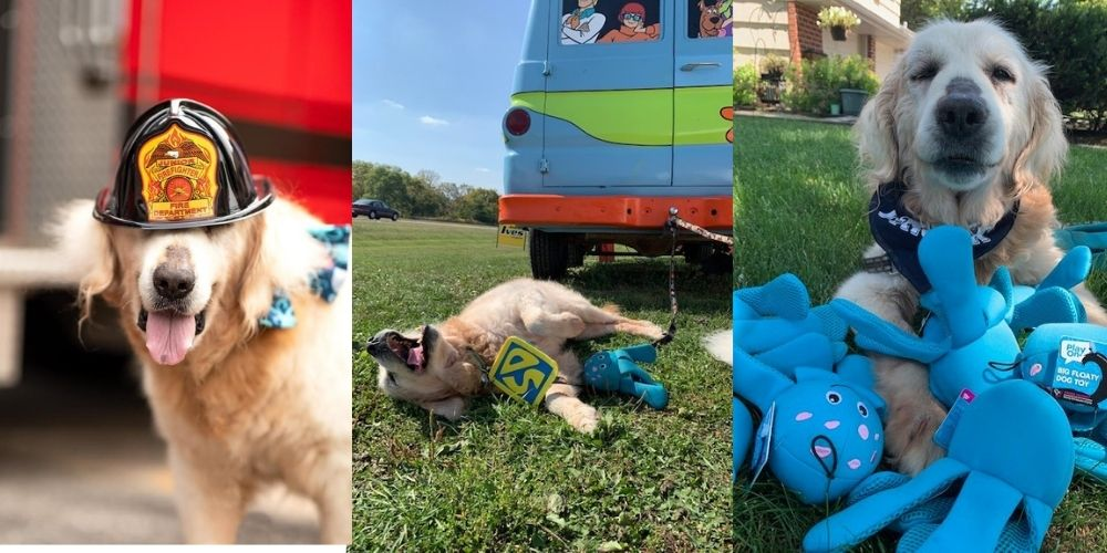 Golden Retriever with Terminal Cancer Has Wishes Granted Via The Ultimate Doggy Bucket List.