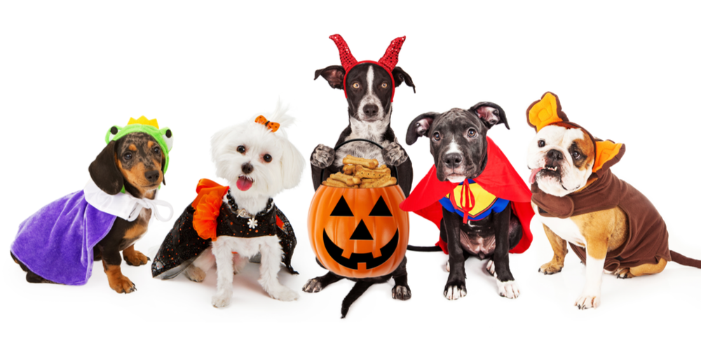 Howl-o-ween: 5 Ways To Celebrate Spooky Season With Your Pup!