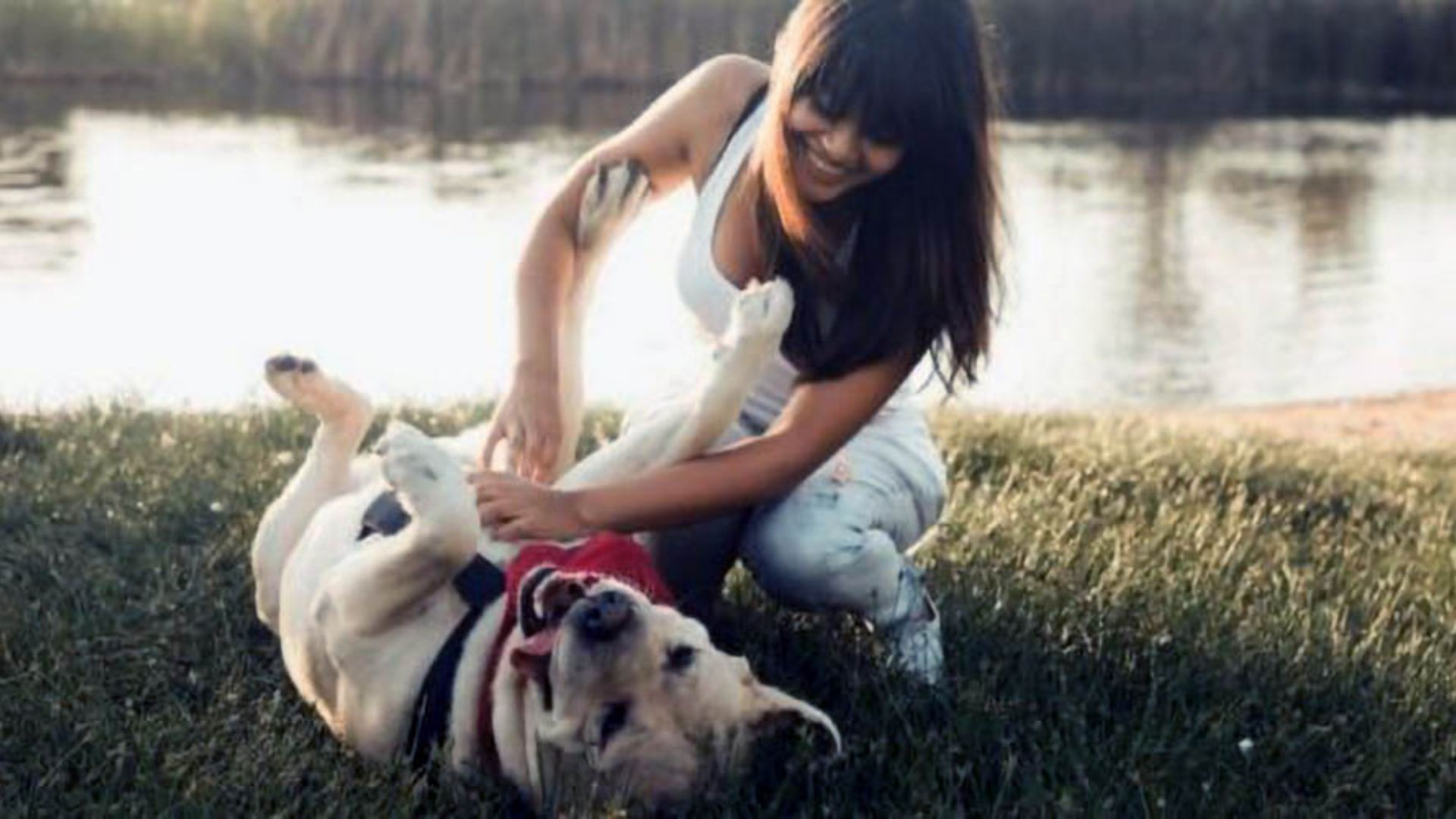 Are Dogs Ticklish? The Amazing Answer!