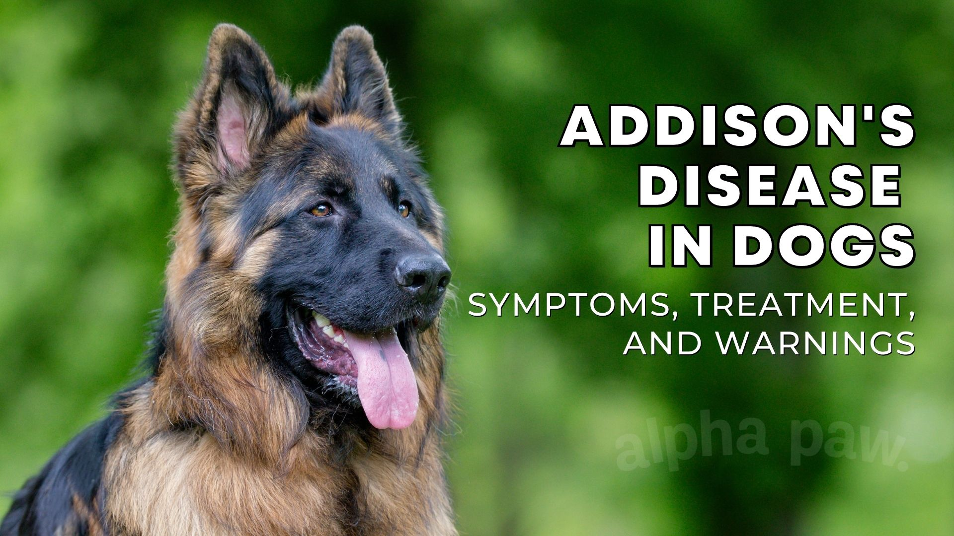 Addison's Disease in Dogs: Symptoms, Treatment & Prevention