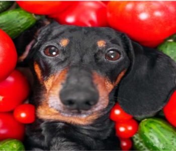 Can Dogs Eat Tomatoes? Our Vet Weighs In