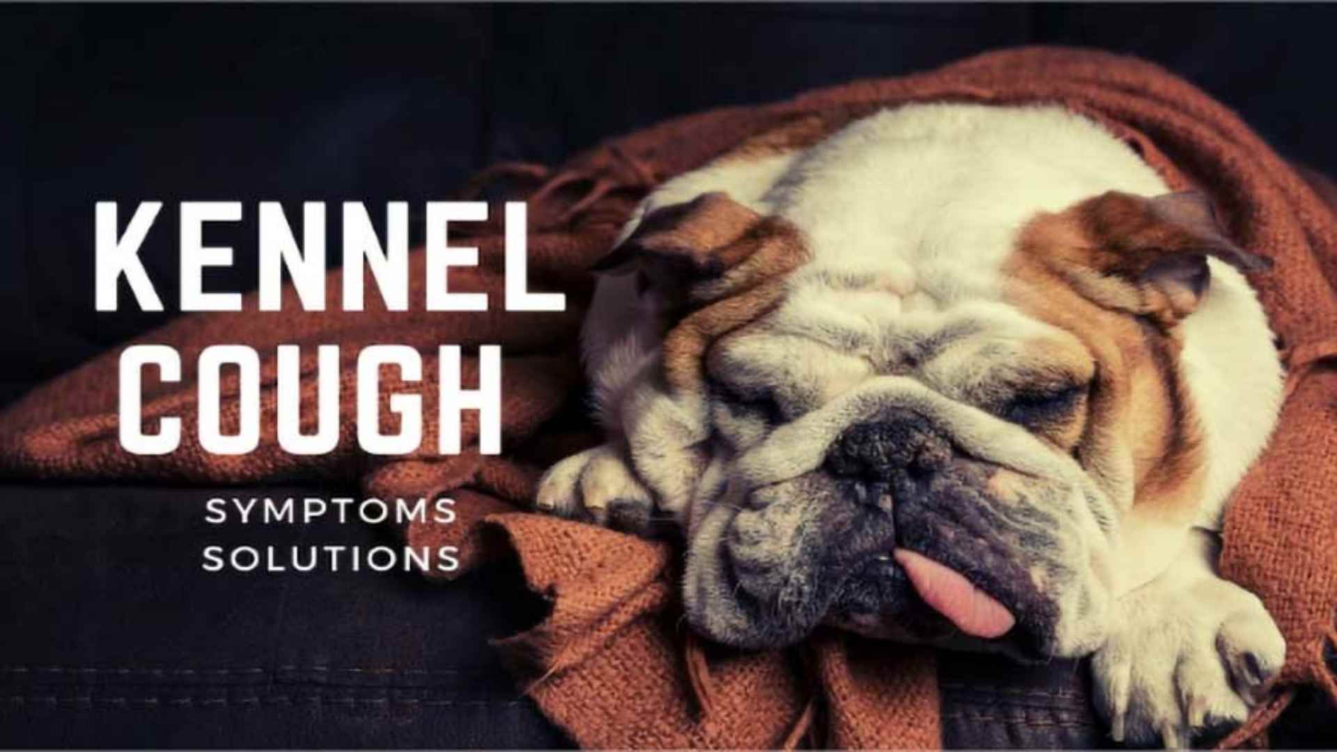 Kennel Cough: Symptoms & Solutions