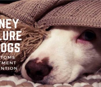 Kidney Failure in Dogs: Symptoms, Treatment & Prevention