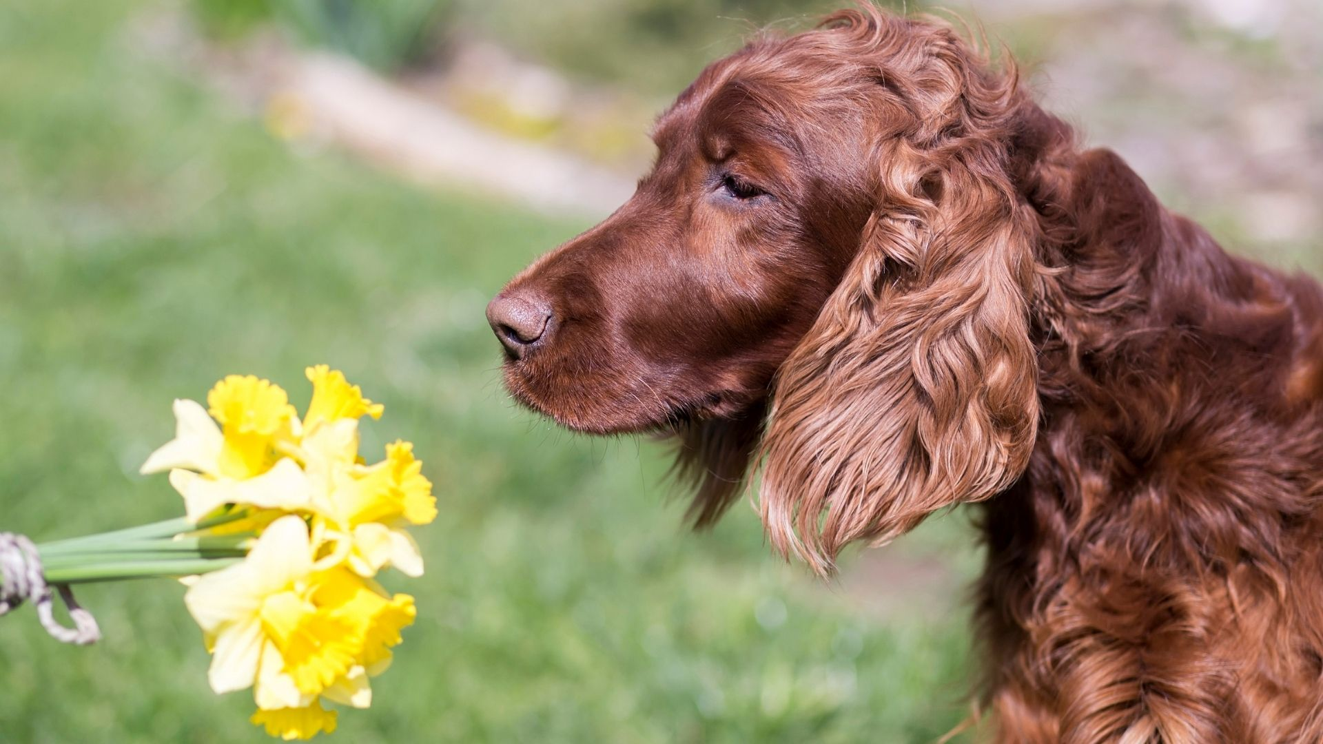 What Can Dogs Smell That Humans Can't?