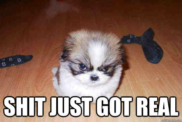 Angry Dog Meme - Shit just got real