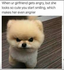 Angry Dog Meme - When ur girlfriend gets angry, but she looks so cute you start smiling, which makes her even angrier