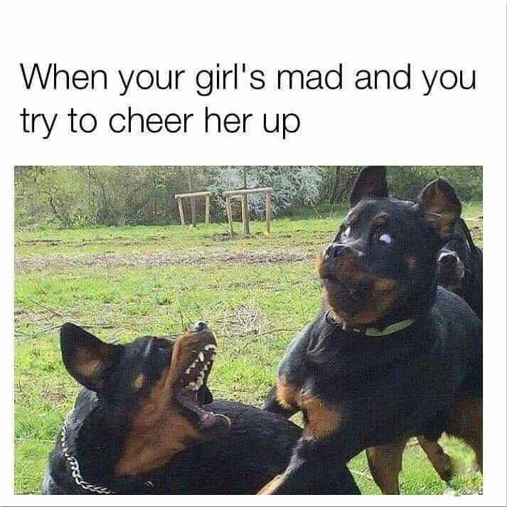 Angry Dog Meme - When your girl's mad and you try to cheer her up