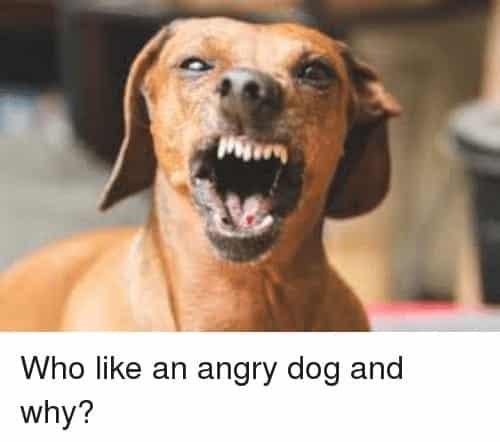 Angry Dog Meme - Who like an angry dog and why?