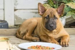 Best Canned Dog Food Brands Reviewed By Veterinarians
