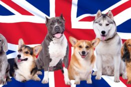 Best UK Dog Food Brands: A Review