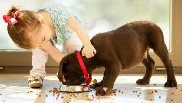 Exclusive Dog Food: An In-Depth Review
