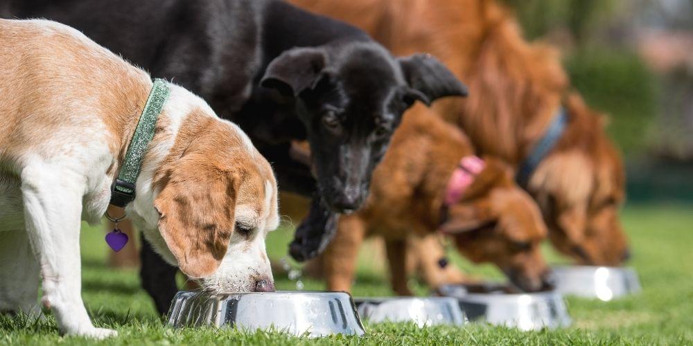 River Run Dog Food
