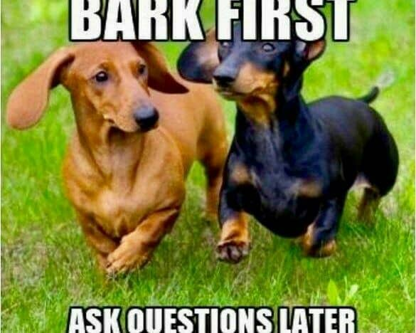 Weiner Dog Meme - Bark First ask questions later