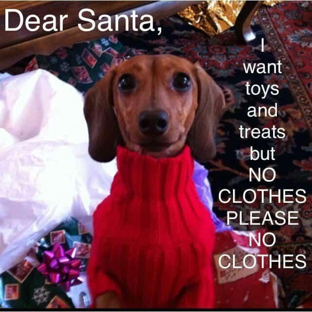 Weiner Dog Meme - Dear Santa, I want toys and treats but no clothes please no clothes