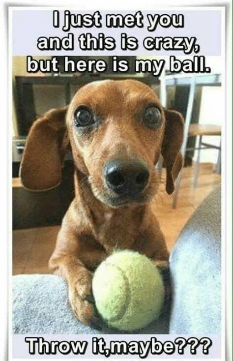 Weiner Dog Meme - I love how the grass tickles my nipples when I run.