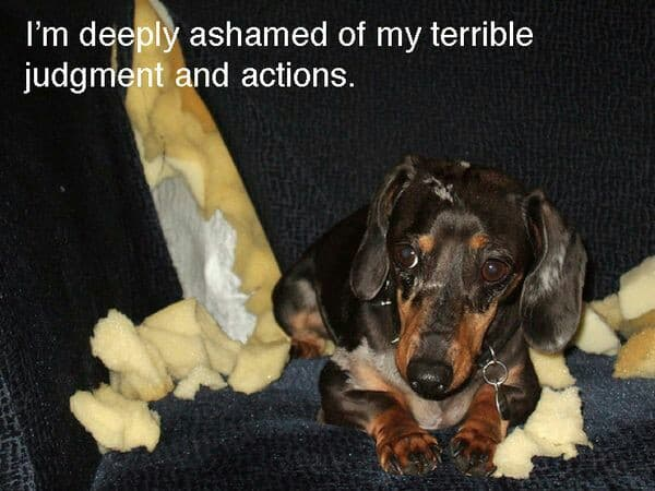 Weiner Dog Meme - I'm deeply ashamed of my terrible judgment and actions.